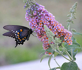 Butterflies seek free nature to sustain themselves and grow, and other creatures seek the free butterflies that gather to enjoy free nature